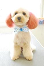 ヘアカラーした犬の写真1