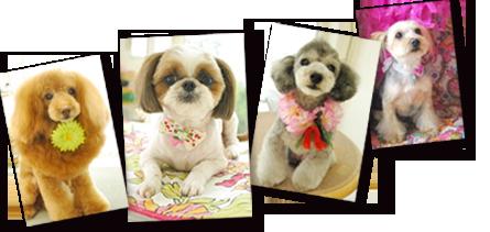 4匹の犬の写真